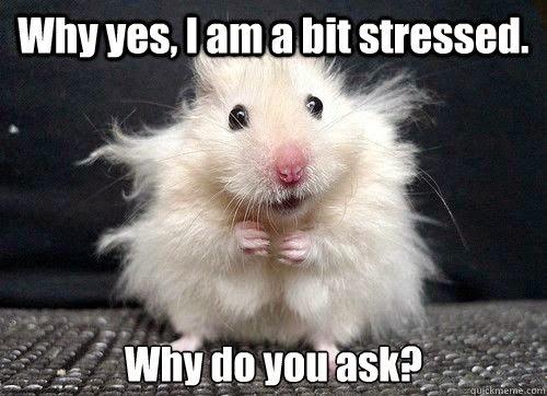 stressed-hamster.jpg