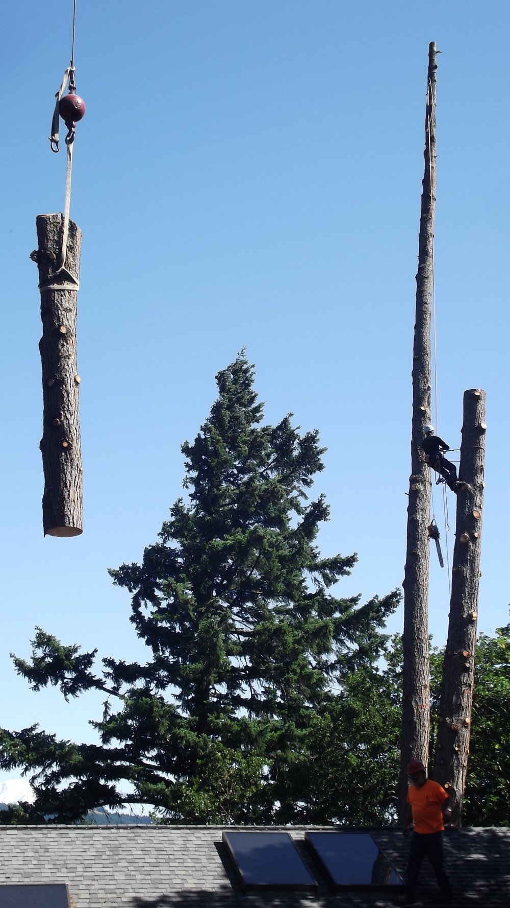 Beetle-Killed Pine Removal Using Crane