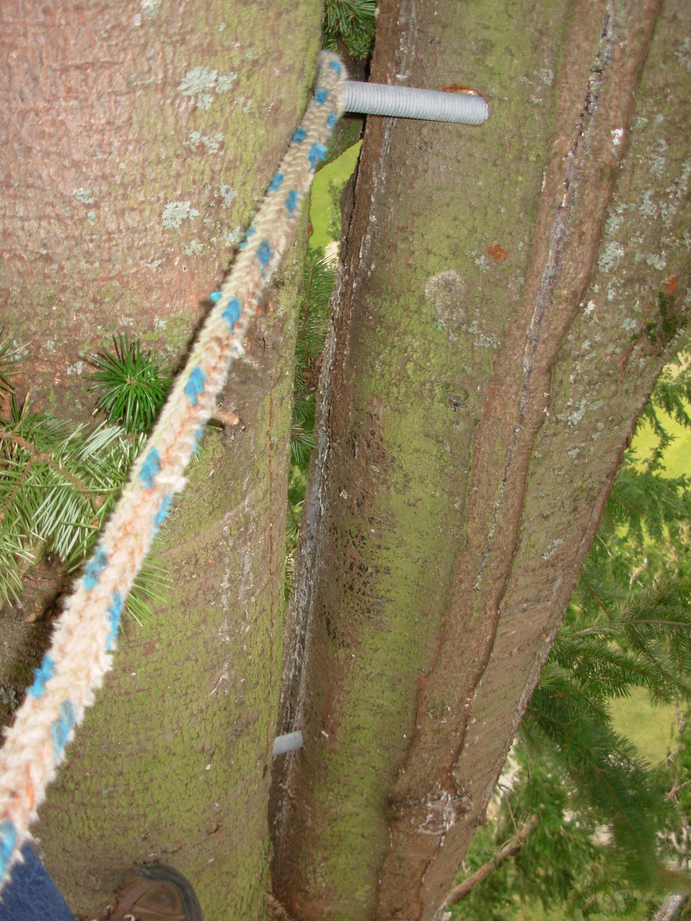 gorge-tree-services-cable-bracing-safety.jpg