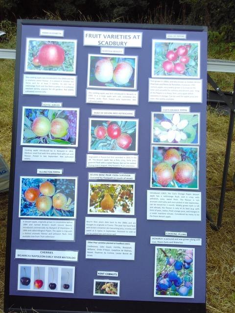 Orchard display 3.jpeg