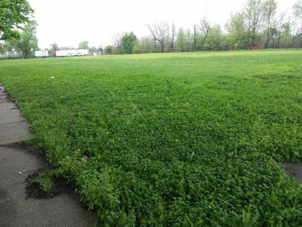 Clover growing where Clark School once stood. Photo via  Genesee County Land Bank .