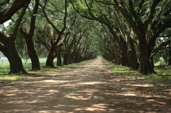 Evergreen Plantation. Photo by Michael McCarthy via  Flickr .