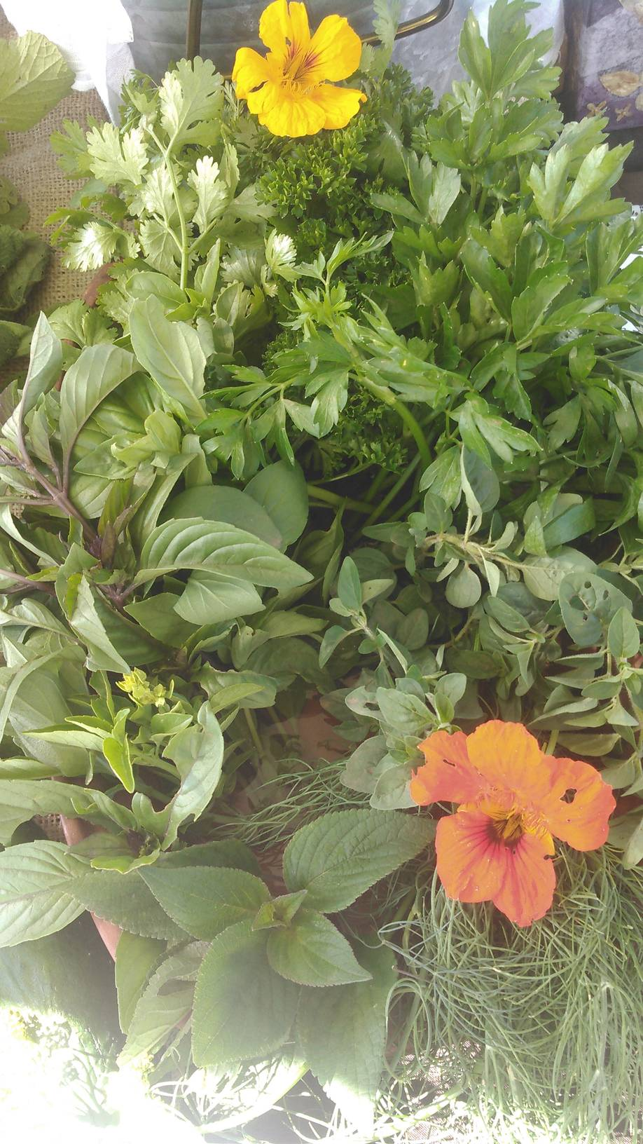 Cut Herb and Flower Mix.jpg