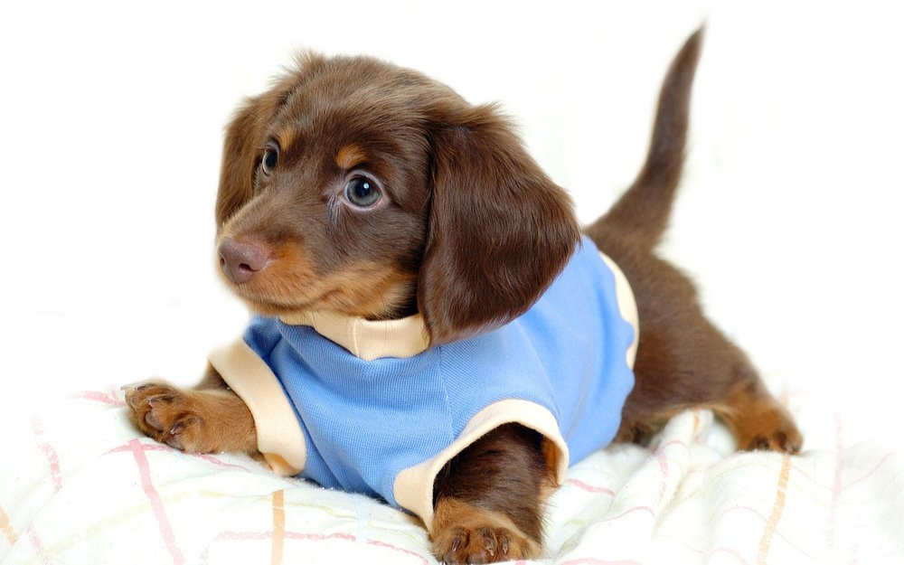 Puppy-In-Clothes-1.jpg