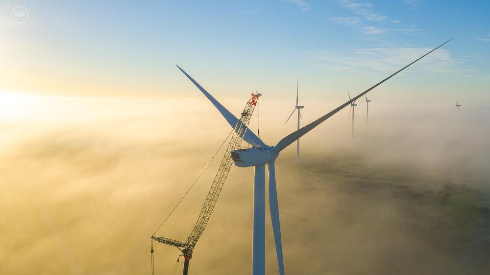 Pfeiffer Cranes Tasmania - Musselroe Wind Farm