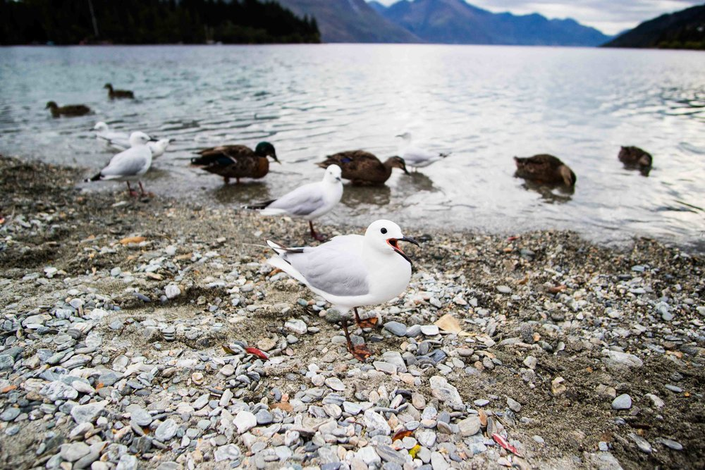 NZ birdy.