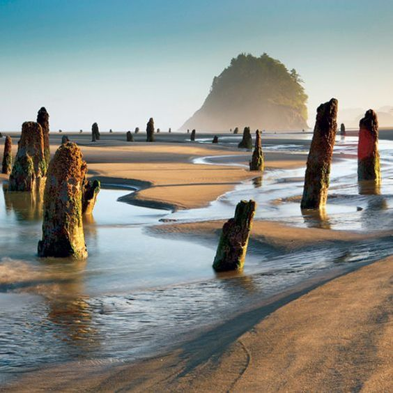 Neskowin Ghost Forest, Oregon Photo:  Race Jones/Outlive Creative  Source:  Via Magazine   Pinterest Inspiration