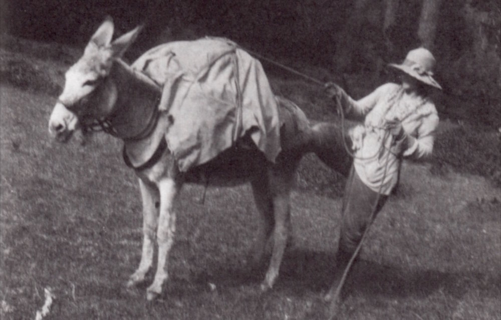 Lilla Leach hitches one of her mules to search for undiscovered flowers in the Kalmiopsis, 1928