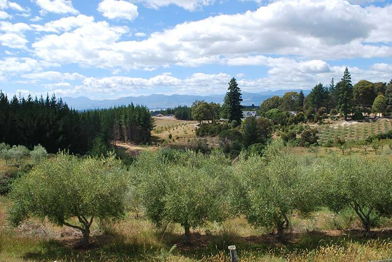 moutere-landscapes.jpg