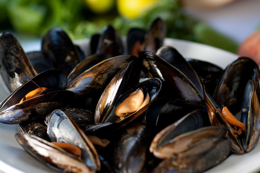 1024x682-Mussels-01.jpg