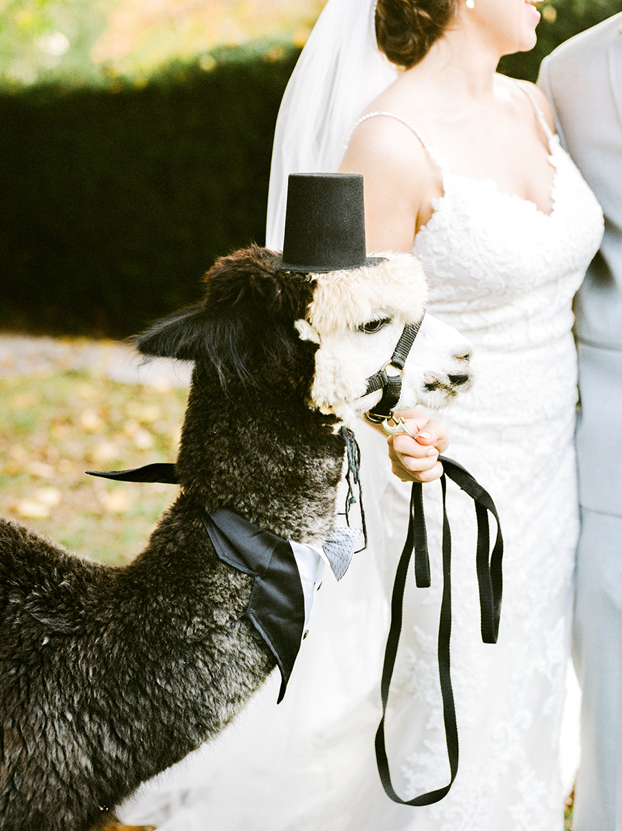 Colorful-Fall-Wedding-DC-Photographer-138.jpg