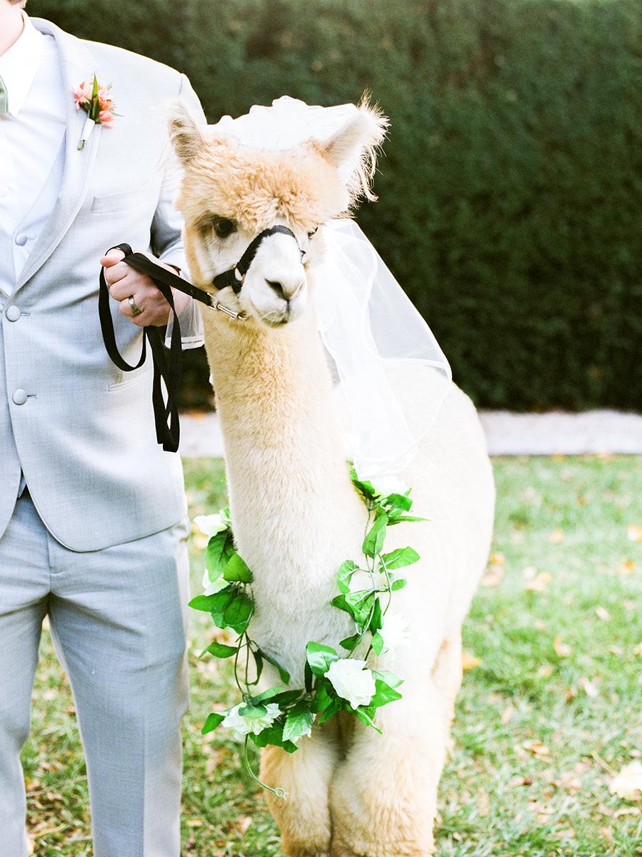 Colorful-Fall-Wedding-DC-Photographer-136.jpg