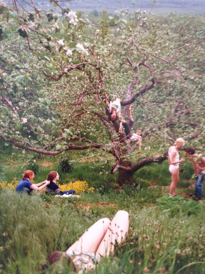 Orchard , 1998.