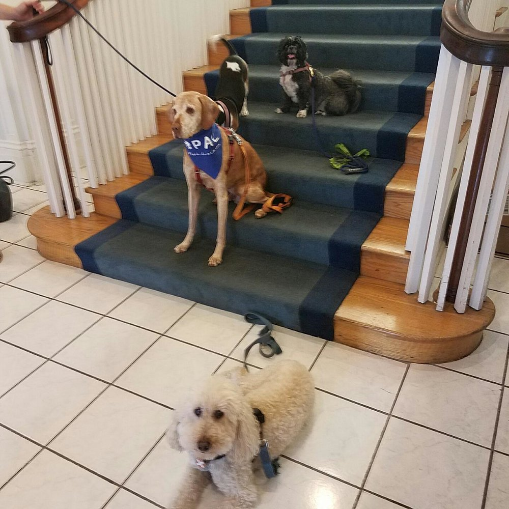 Penny and fellow therapy dogs from the P.A.L. organization. Penny is in the very back with the big smile