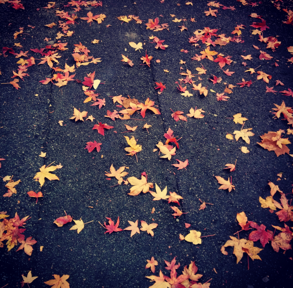 leaves-on-the-street.png