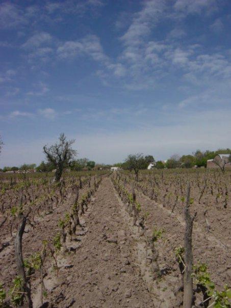 mendoza-1st-winery.jpg