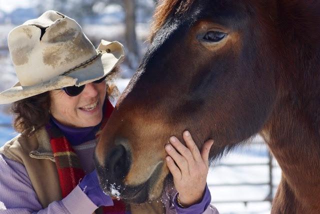alice horses (2).jpg