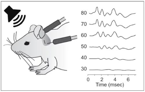 Mammalian-Efficacy.png