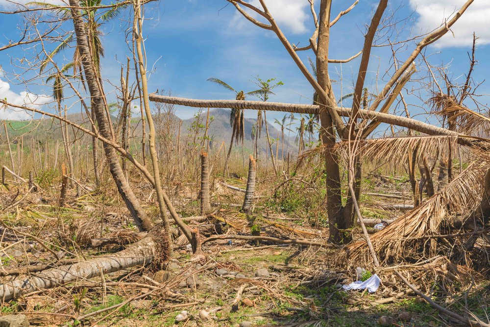 Canefield, Dominica - 160mph wind gusts snapped trees like toothpicks.