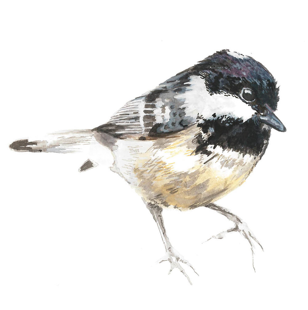 Square-Finch-Cover.jpg