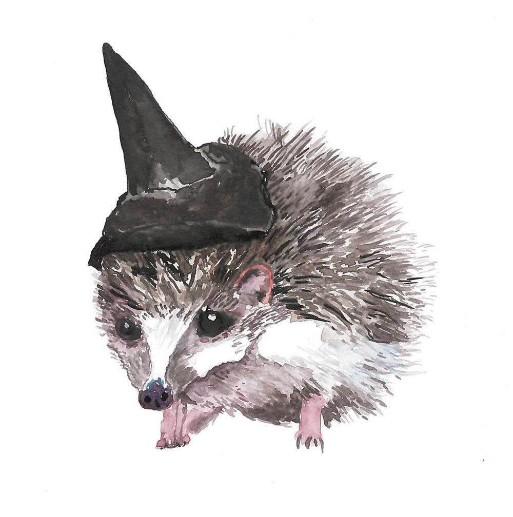 Square-Hedgehog-Cover-1.jpg
