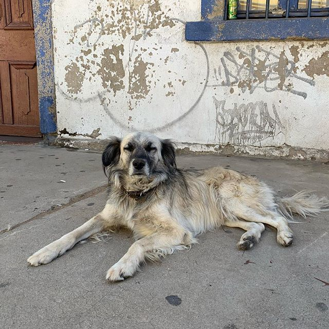 """Suggested slogan for Valparaíso: """"Come for the street art... stay for the street dogs"""" 😍😍😍"""