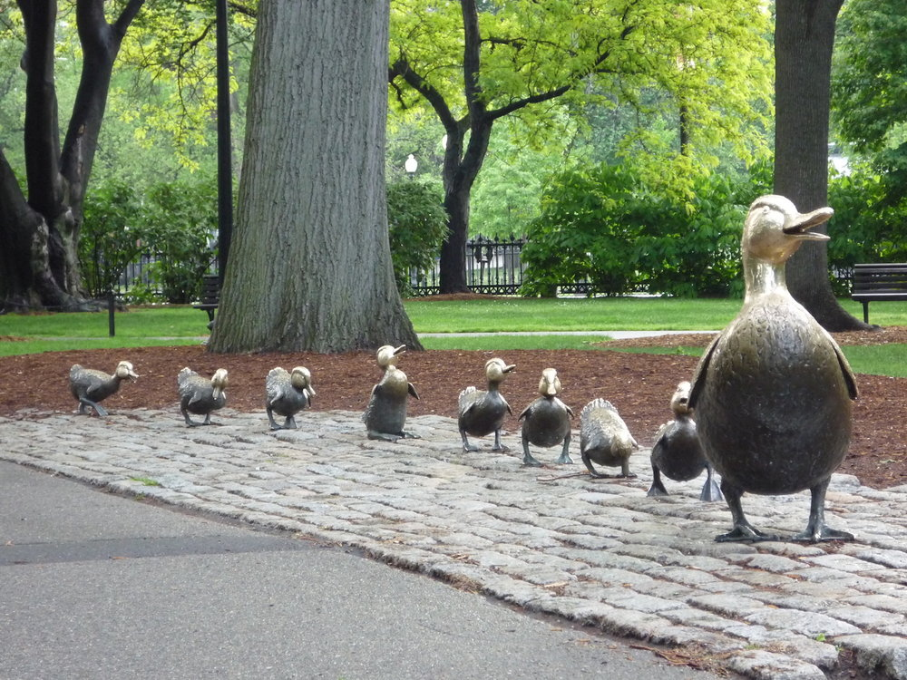 boston ducks  front.JPG
