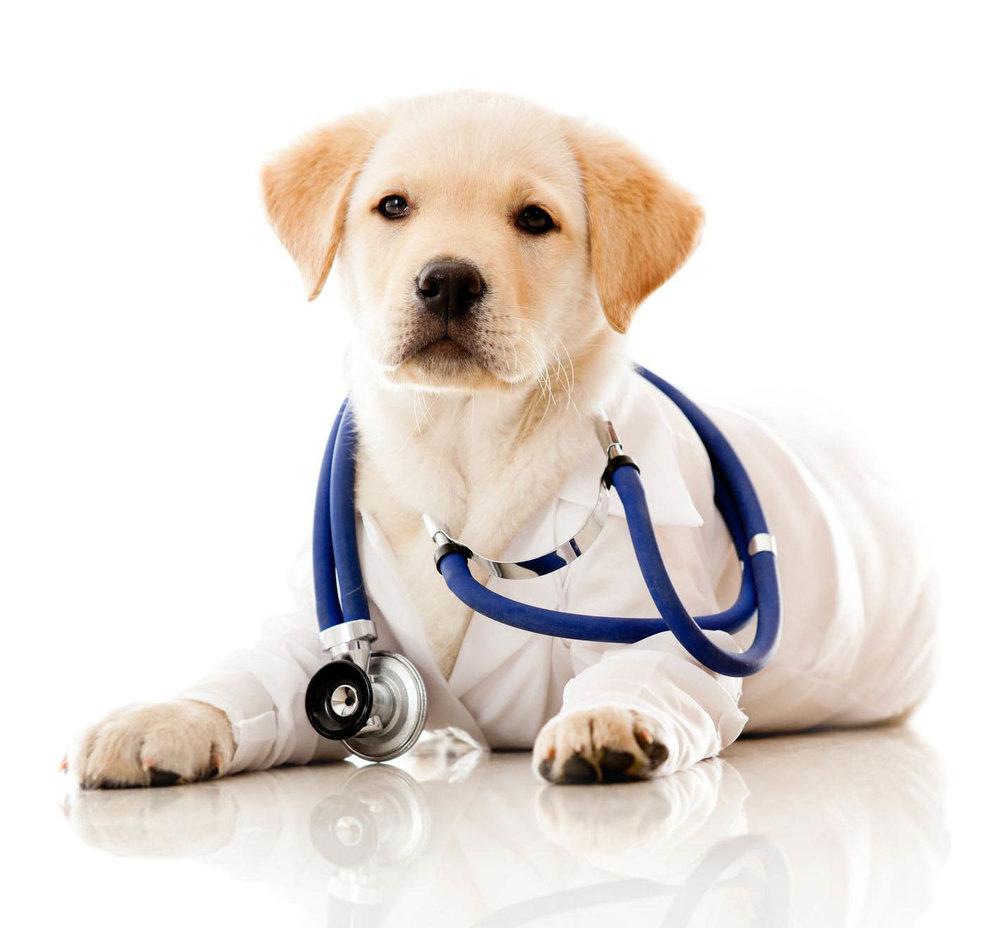 doctor-dog.jpg