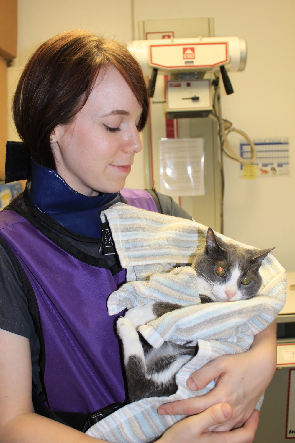 Our veterinary assistants will gently relocate your cat from surgery to the recovery area.