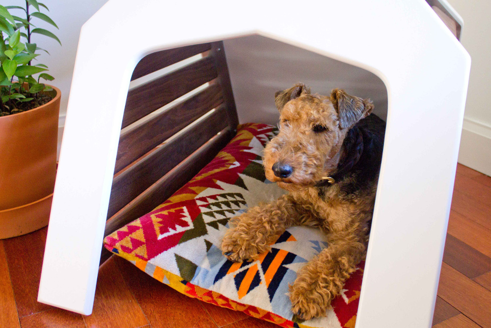 gamla_studio_branch_freedman_gimli_welsh_terrier_06.jpg