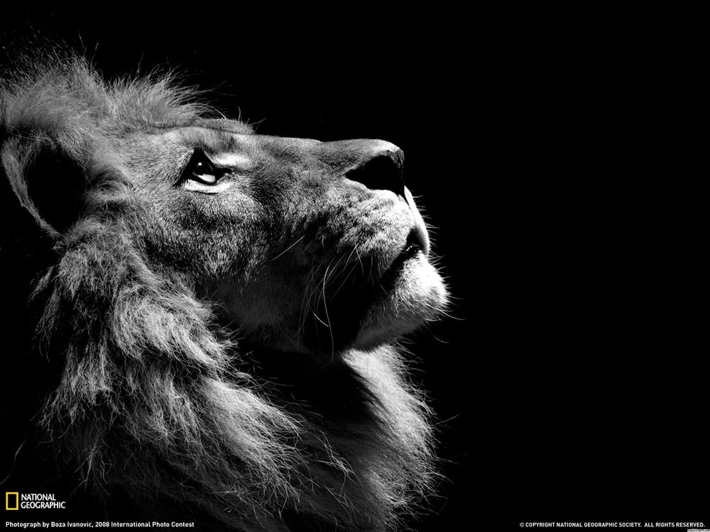 boy-black-national-geographic-and-white-lion-wallchan-626238.jpg