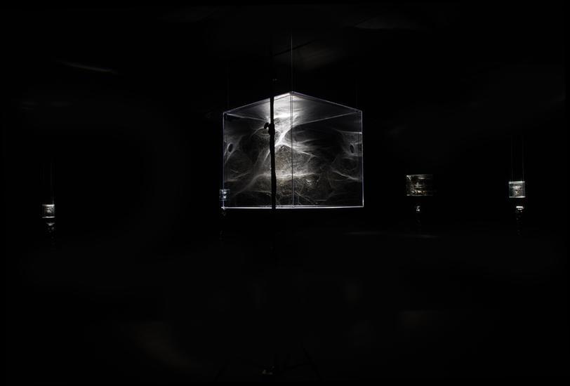 spiderwebinstallation2