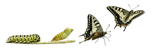 butterfly-510