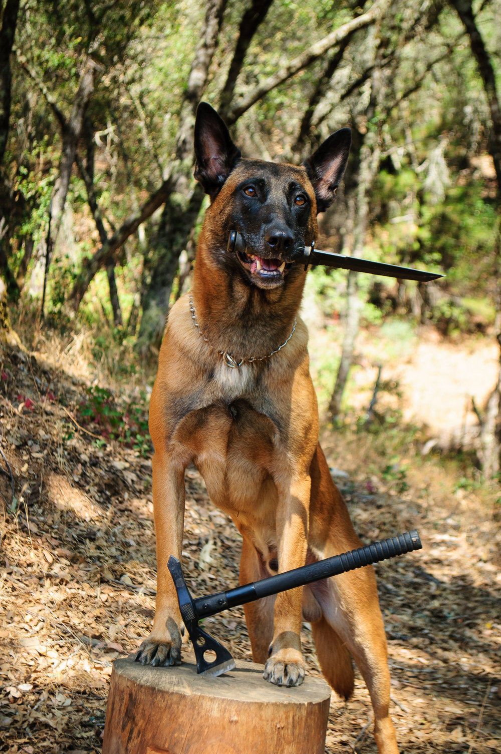Canine Equipment - Bringing the bite to the fightOur equipment was specifically designed to increase the workability and effectiveness of our nations working dogs. Whether it be for patrol, detection, search and rescue operations or service animals, our equipment was built to handle the riggers of duty. We stand behind all of our equipment with a lifetime guarantee.