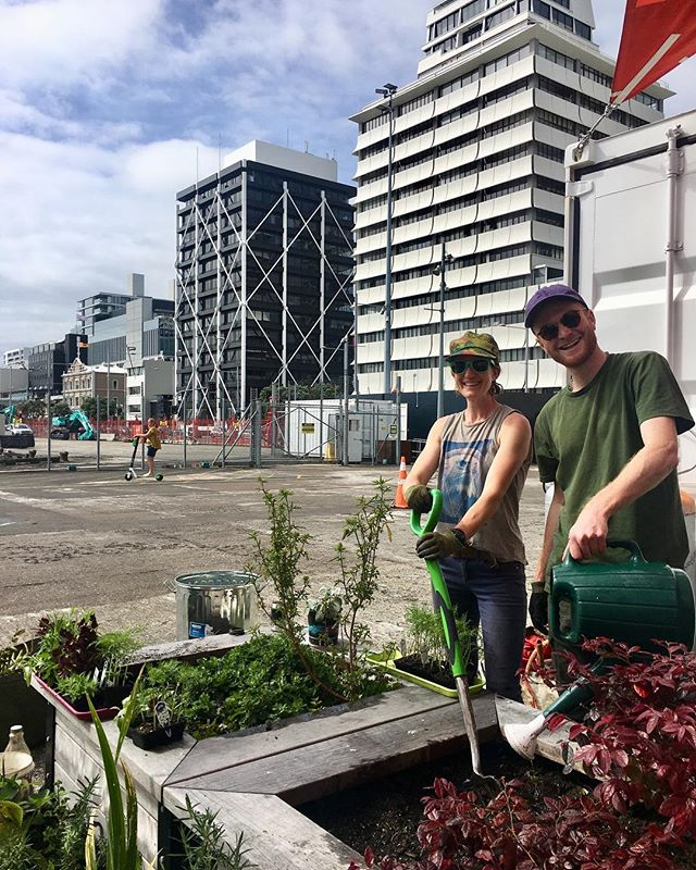 Today we are on Queens Wharf regenerating the gardens in preparation for summer. If you feel like getting involved, making some friends, drinking herbal tea, and learning how to get your gardens thriving this summer come and join us 🌻🐛🌅 Thank you Panuku Development Auckland and @yourwaterfront for giving us the opportunity to transform the container village with beautiful flowers 💐 #placemaking #queenswharf #aucklandcity #newfriends #communitygardening #placemakingakl #summer #containervillage #panukudevelopmentauckland