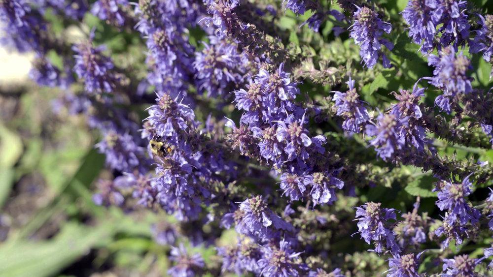 SEDALIA_D2_Garden-1.jpg