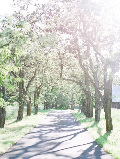 Spokane vacant driveway image tall trees
