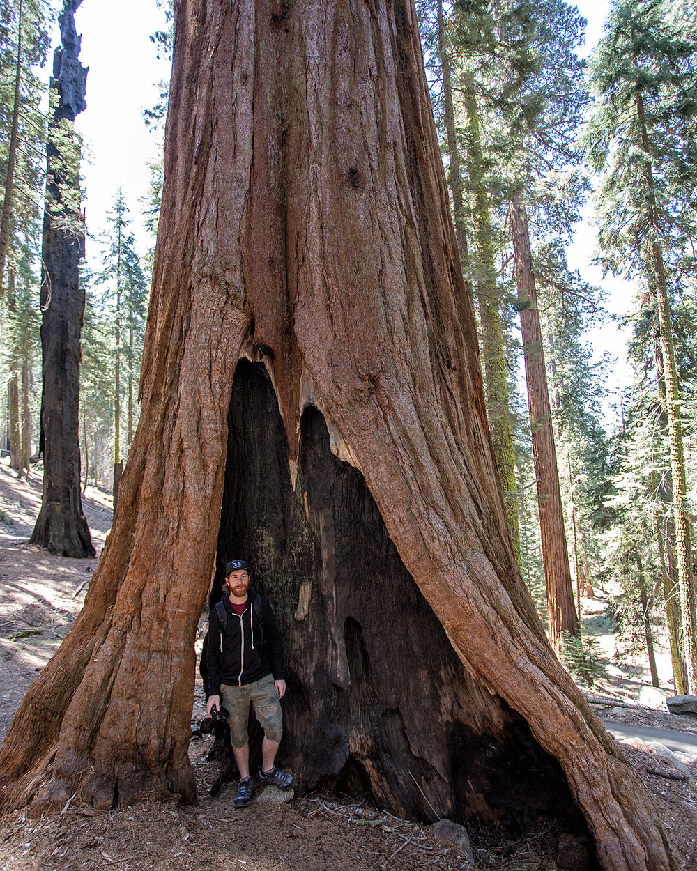 RZSequoia.jpg
