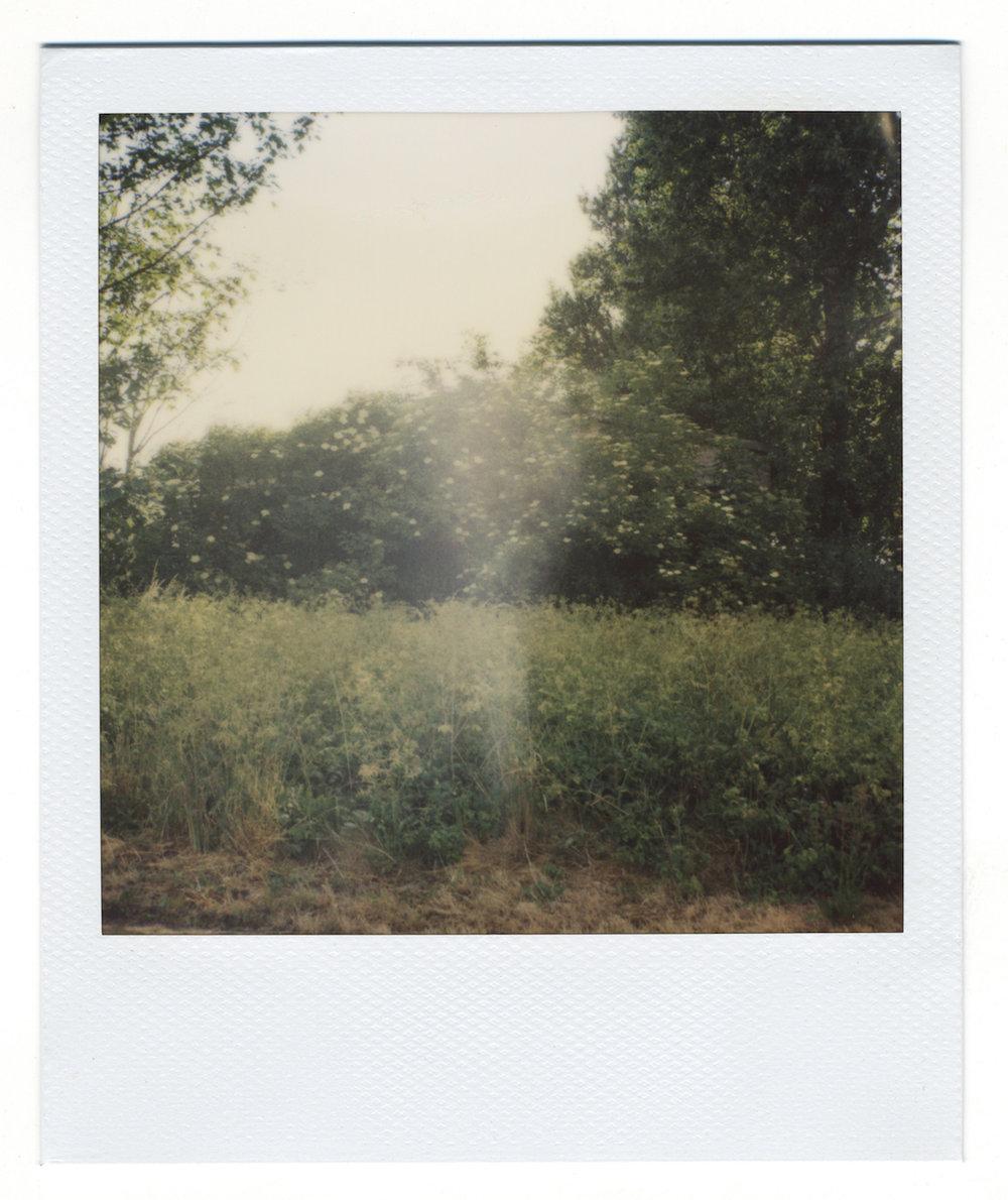Michael John Whelan  I, Asimov 2012 Polaroid, framed 31.5 x 33.5 cm