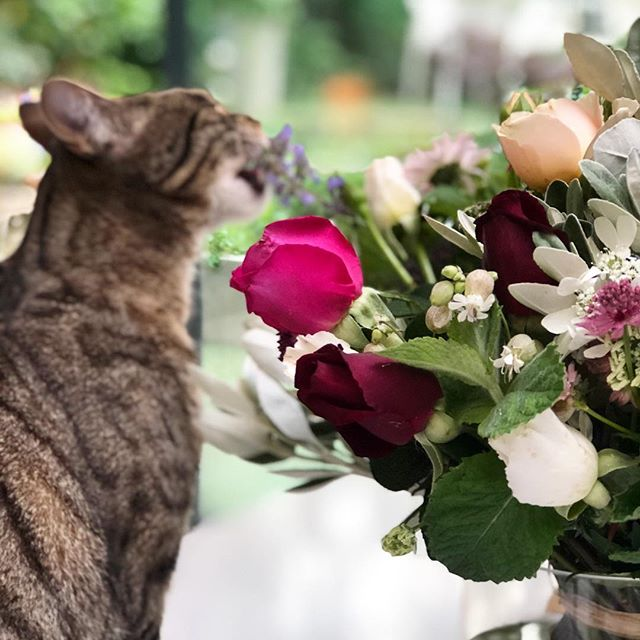 That didn't take long #hazard #cat #catmint #truelove @therealflowerco