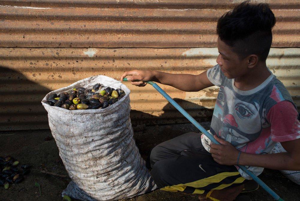 Caught in the act - washing pili nuts///Pris sur le vif : le rinçage des noix de pili