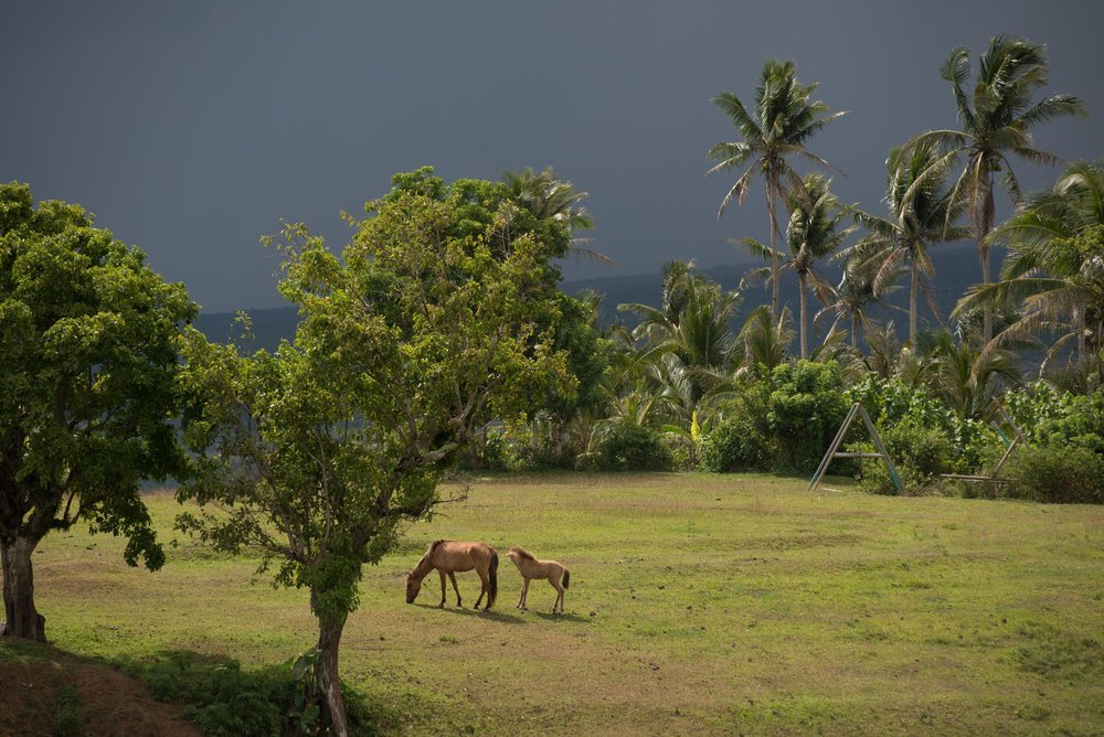 Horse & Foal in the shadow of Mount Mayon The Philippines///Une jument et son poulain, à l'ombre du Mont Mayon, Philippines