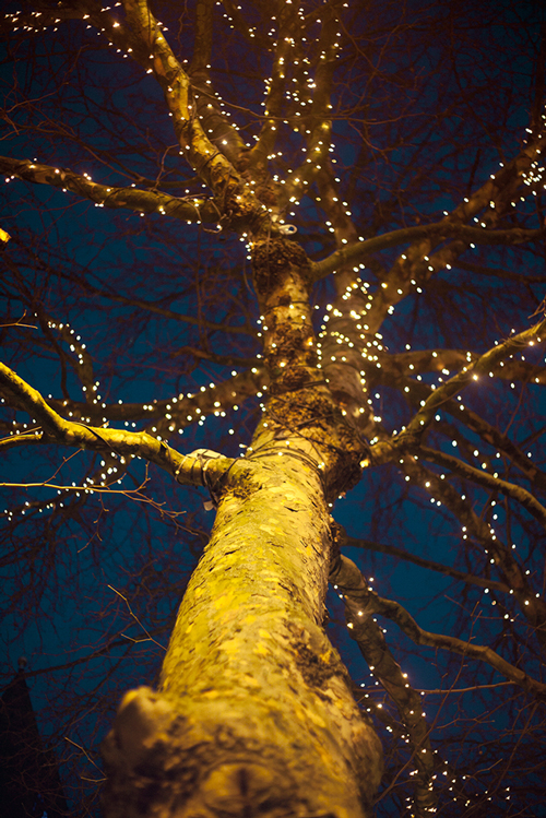christmas-lights-novel-Anna-Roberts-Photography.jpg