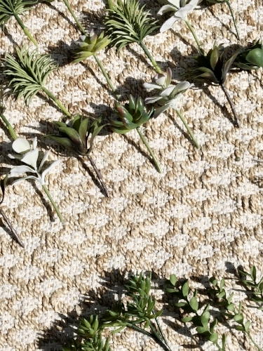 succulents on a jute rug.jpeg