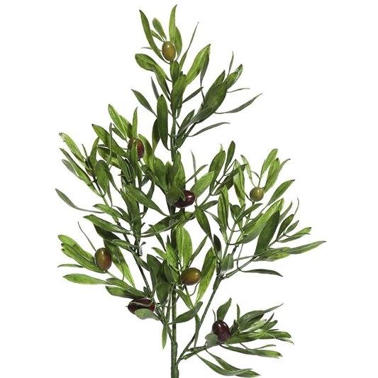 Olive+Leaf+Spray+Fruit+Tree.jpg