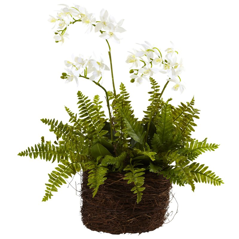 Mini+Phalaenopsis+and+Fern+with+Bridsnest+Planter.jpg