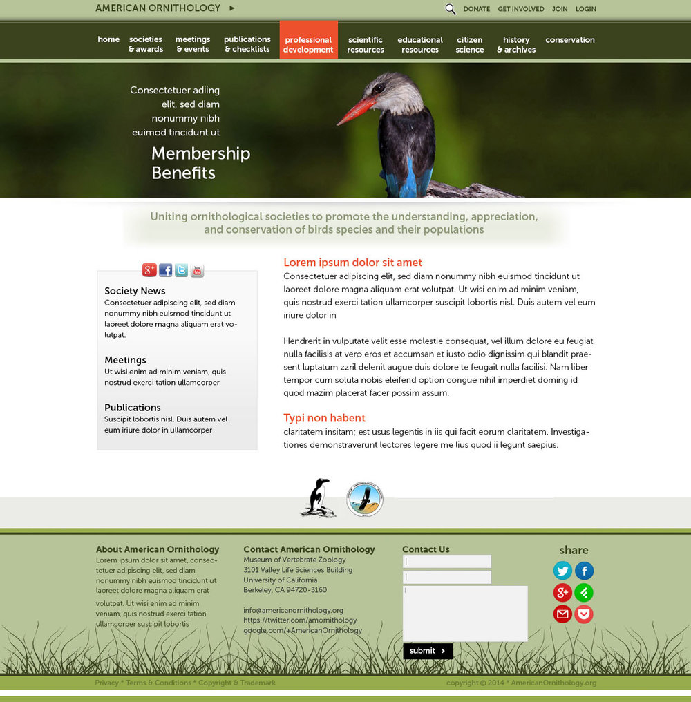 """BAck page mock up - We were fortunate to receive hundreds of beautiful, carefully curated ornithological photos taken by scientists working in the field. There was an emphasis on design simplicity, allowing content and images to """"pop."""" The template was built from scratch from the Photoshop design, both by Site Shack."""