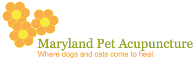 Maryland Pet Acupuncture