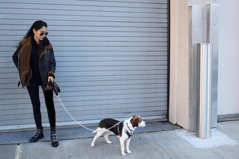Model:  Arthas, the adorable dog