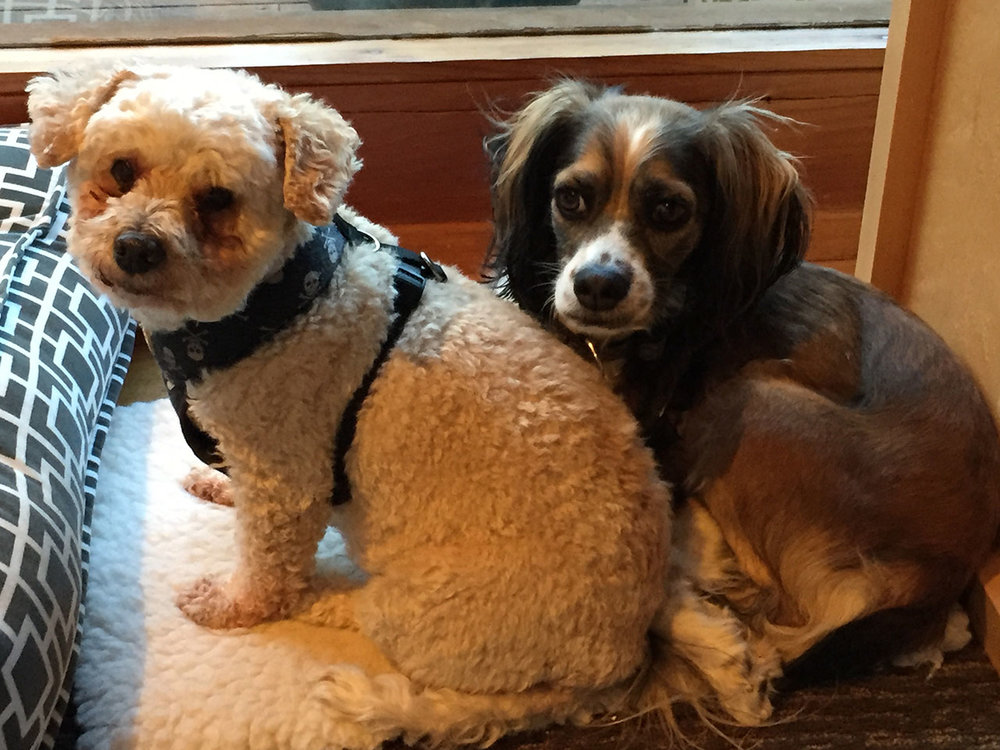 SHOP DOGGIE, DEXTER (L), AND BFF KOKO